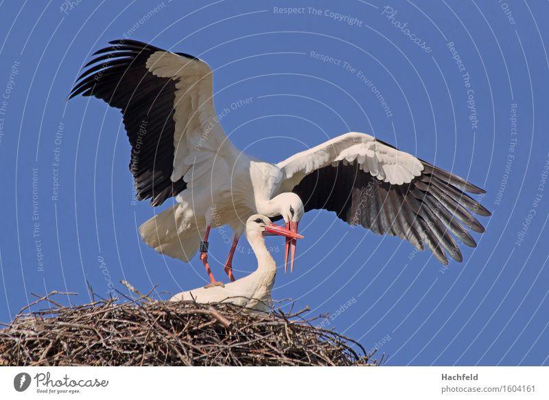 Nature Animal Bird Esthetic Spring fever Rutting season