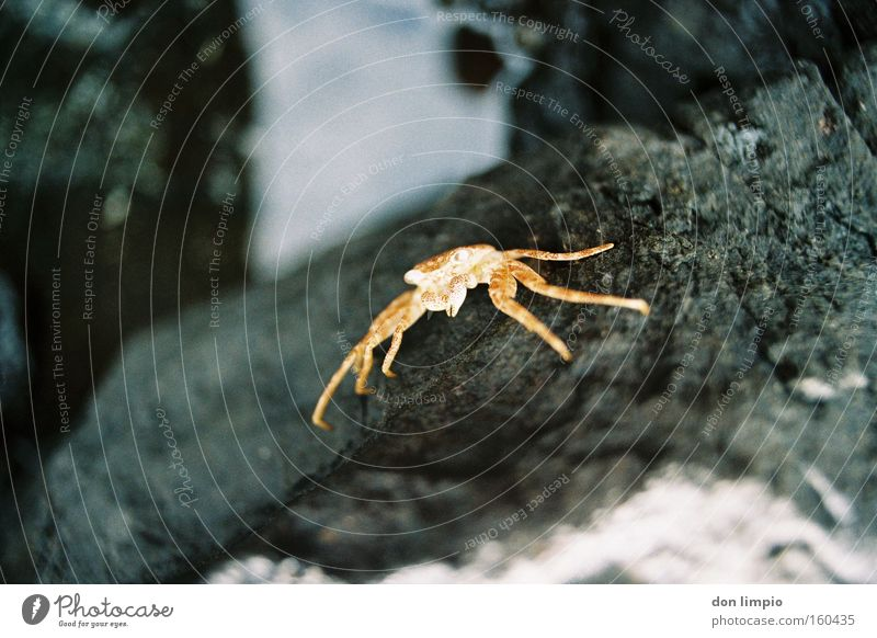 Nature Death Stone Analog Living thing Dried Shellfish Shrimp Crustacean
