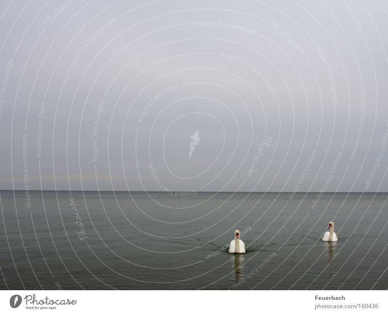 Sky Water Ocean Animal Loneliness Calm Lake Friendship 2 Horizon Bird Together Pair of animals In pairs Serene Vantage point