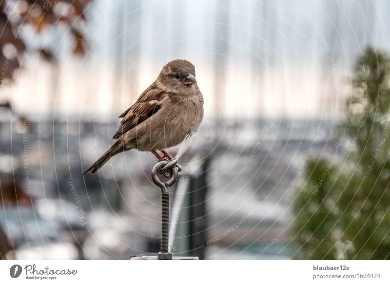 sparrow Animal Wild animal Bird Animal face 1 Friendliness Maritime Colour photo Exterior shot Deserted Animal portrait Looking into the camera