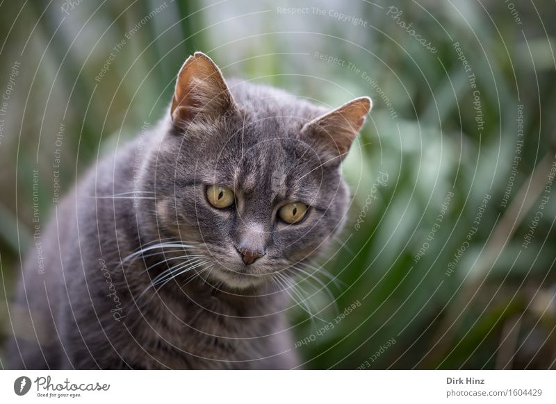 fixed Leisure and hobbies Living or residing Nature Garden Animal Pet Cat Animal face Pelt 1 Love of animals Concentrate Life Looking Observe Fix Wait Patient