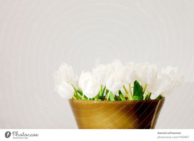 Spring in front of a grey wall Tulip Flower Bouquet Vase Pottery White Brown Birthday Decoration