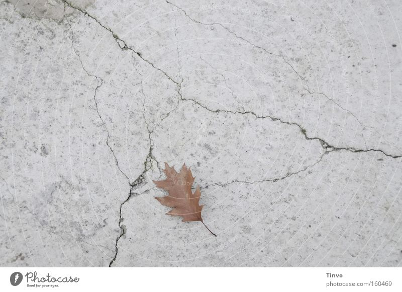 Calm Leaf Loneliness Sadness Concrete Grief Gloomy End Transience Crack & Rip & Tear Individual Lose Dreary Single Concrete floor
