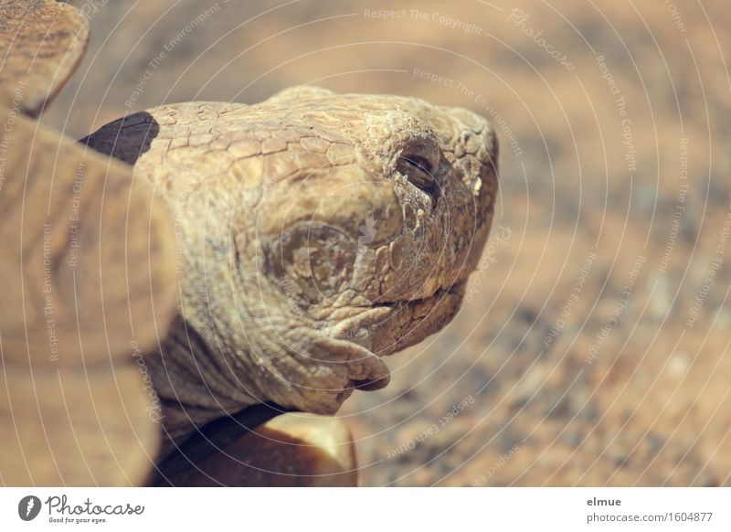 E.T. - the retreat Personal hygiene Skin Face Turtle Tortoise-shell Giant tortoise Reptiles Dinosaur Fossil Primitive times Looking Sleep Stand Old Exceptional