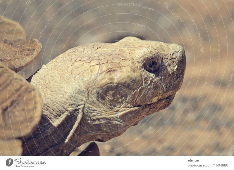 E.T. - the knowledge Personal hygiene Skin Turtle Tortoise-shell Giant tortoise Reptiles Dinosaur Fossil Primitive times Looking To dry up Old Near Dry