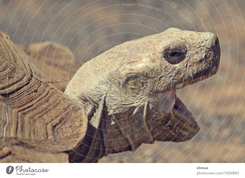 E.T. - the establishment of contact Turtle Giant tortoise Tortoise-shell Reptiles e.t. Orange peel Wrinkle Looking Scream Old Threat Authentic Creepy Rebellious
