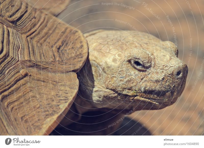 E.T. - the apparition Turtle Tortoise-shell Giant tortoise Reptiles Old Dinosaur Fossil Observe Looking Hideous Near Curiosity Serene Patient Calm Wisdom Modest