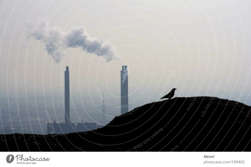 Krabat on his travels! Raven birds Slagheap Industrial Photography Industry The Ruhr Mining Nature Exterior shot Electricity generating station