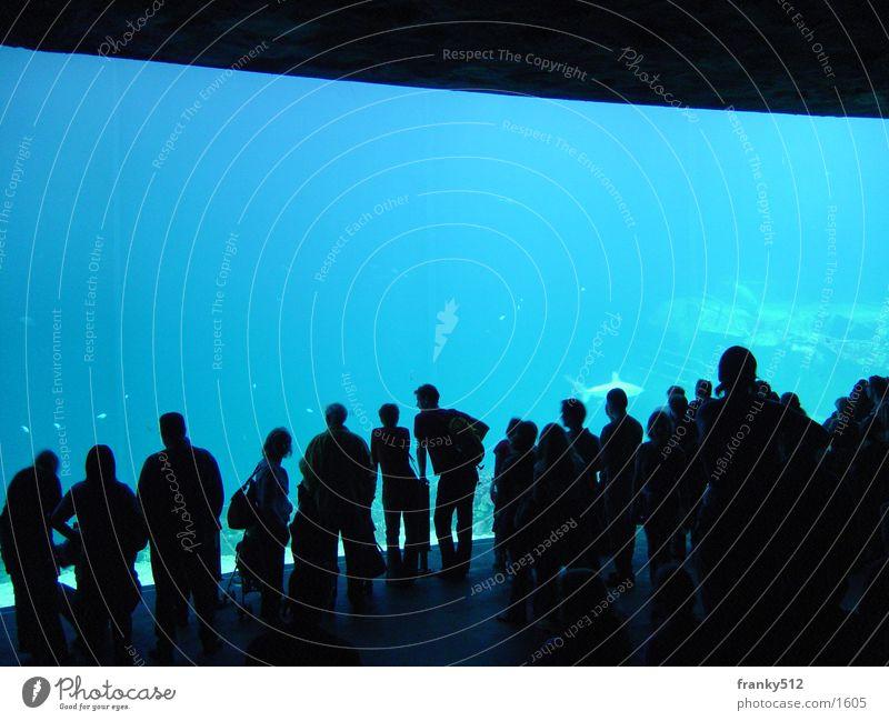 underwater world Zoo Aquarium Netherlands Water Fish Human being