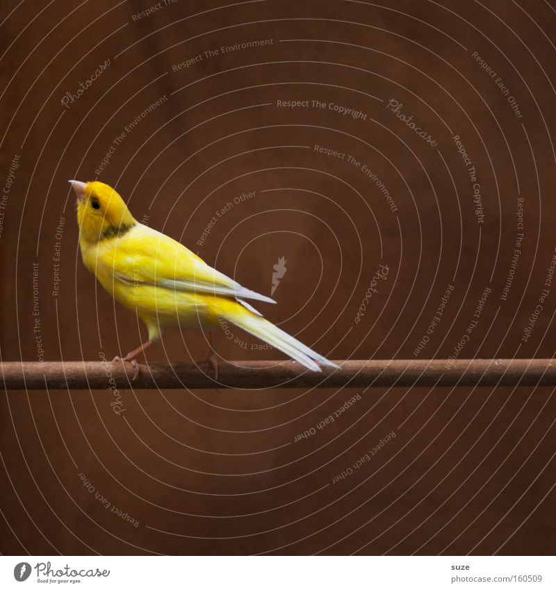 Beautiful Loneliness Animal Yellow Funny Small Brown Bird Sit Authentic Wait Feather Curiosity Concentrate Pet Animalistic