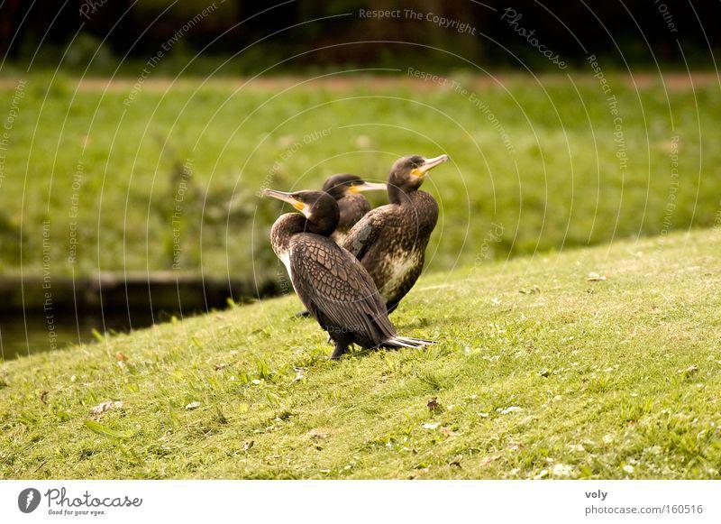 Water Green Summer Calm Animal Colour Landscape Bird