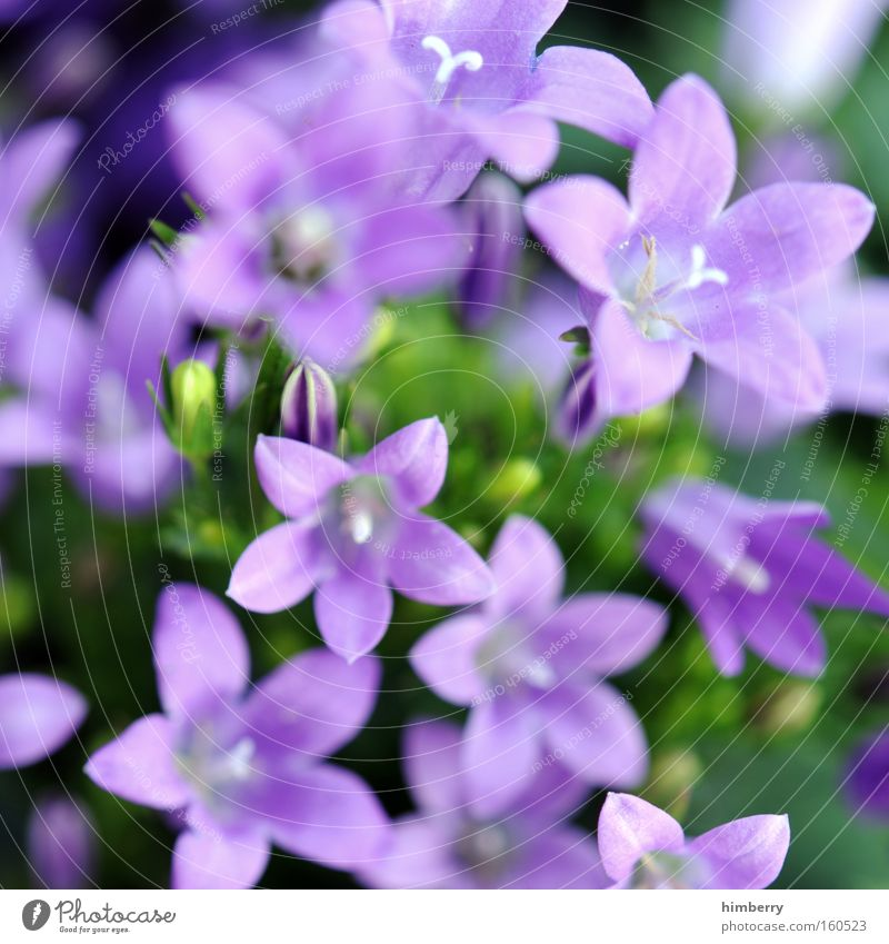 milkablume Flower Nature Spring Fresh Horticulture Plant Botany Background picture Floristry Blossom Houseplant