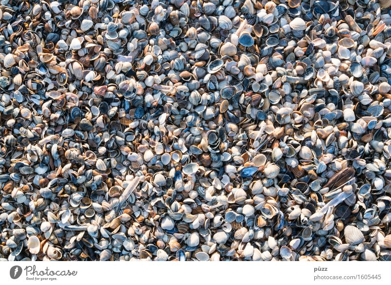Only mussels everywhere Vacation & Travel Summer Summer vacation Beach Ocean Environment Nature Animal Elements Earth Sand Coast North Sea Baltic Sea Mussel