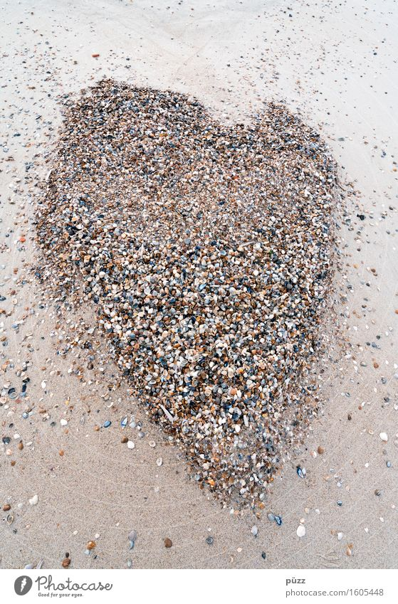 clam heart Vacation & Travel Summer Summer vacation Beach Environment Nature Animal Elements Earth Sand Coast North Sea Mussel Sign Heart Small Brown Love