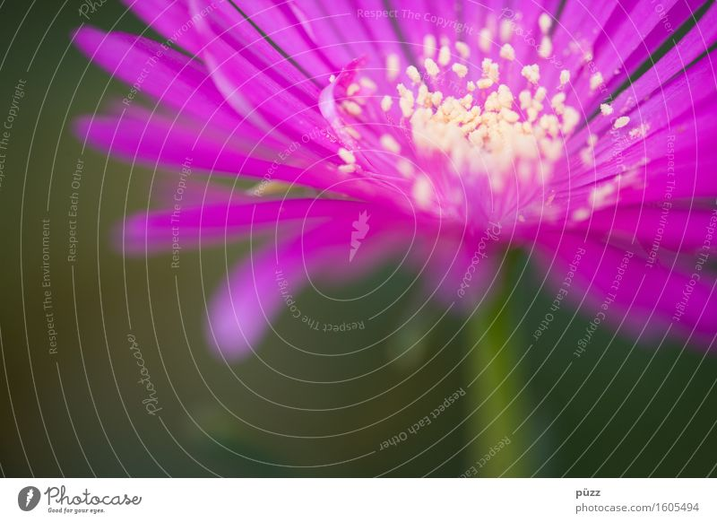 Nature Plant Summer Beautiful Flower Leaf Environment Yellow Blossom Emotions Spring Pink Blossoming Romance Violet Fragrance