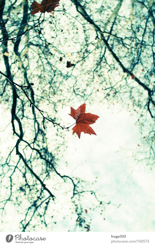 Autumn Leaf Loneliness Empty Green Yellow Twig Branch Nature Blue Sky End Goodbye Autumn leaves Contrast Grief Distress