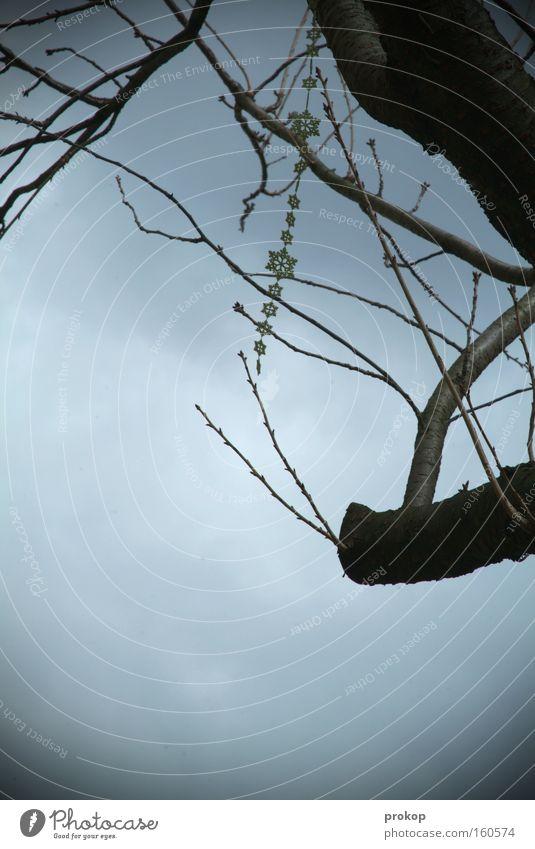 Sky Tree Clouds Gray Success Gloomy Branch Jewellery Chain Hang Bleak Lose Dangle