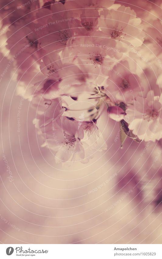 Nature Plant Summer Tree Flower Landscape Leaf Girl Blossom Spring Background picture Garden Pink Design Park Elegant