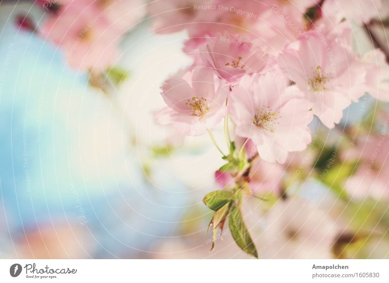 Sky Nature Plant Summer Tree Flower Landscape Animal Environment Blossom Spring Background picture Happy Garden Design Park