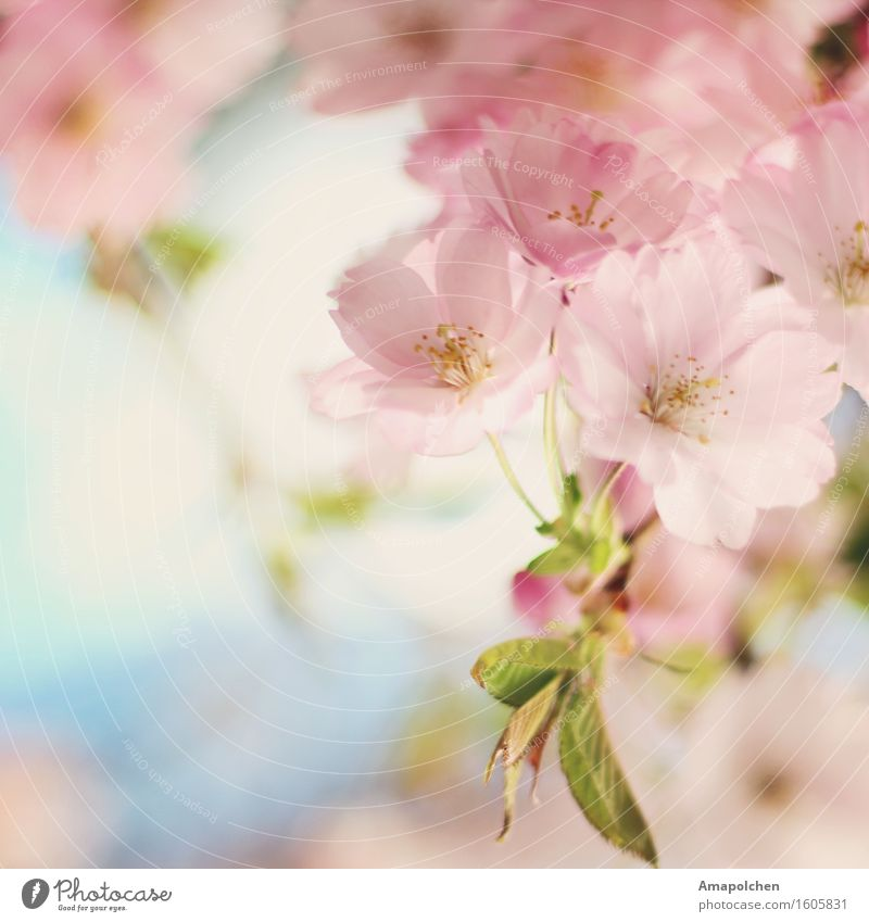 ::16-16:: Environment Nature Plant Sky Spring Summer Climate Weather Tree Flower Leaf Blossom Agricultural crop Wild plant Garden Park Happy Happiness