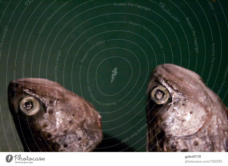 Eyes Head Fish Fish Frozen Motionless Twin Fish eyes Scales Trout Gill Deep frozen Fish head