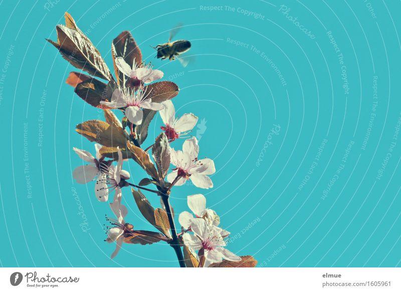 Nature Blue Colour White Eroticism Spring Blossom Happy Garden Flying Illuminate Aviation Beginning Energy Blossoming Joie de vivre (Vitality)