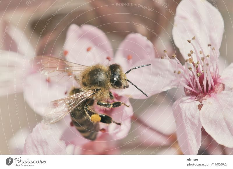 Nature Eroticism Life Spring Blossom Happy Garden Pink Park Beginning Blossoming Joie de vivre (Vitality) Romance Hope Network Insect