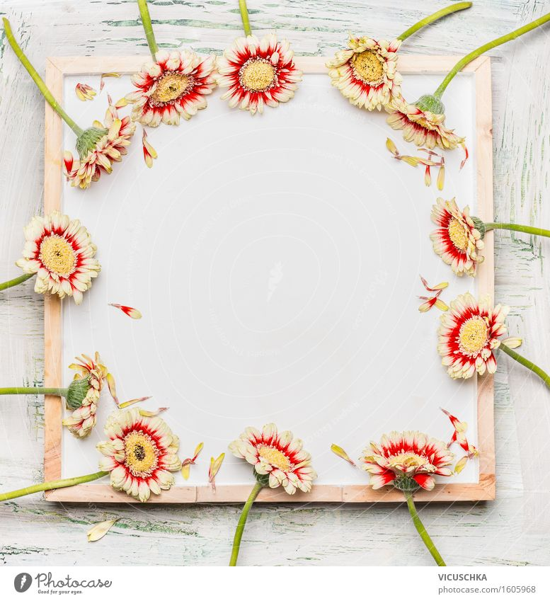 Gerbera flowers on white board Style Design Decoration Feasts & Celebrations Valentine's Day Mother's Day Birthday Nature Plant Flower Leaf Blossom Bouquet