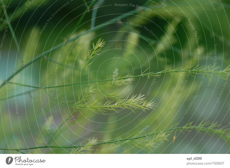 whispering grass Grass Green Herbs and spices Blur Branch Branched Colour