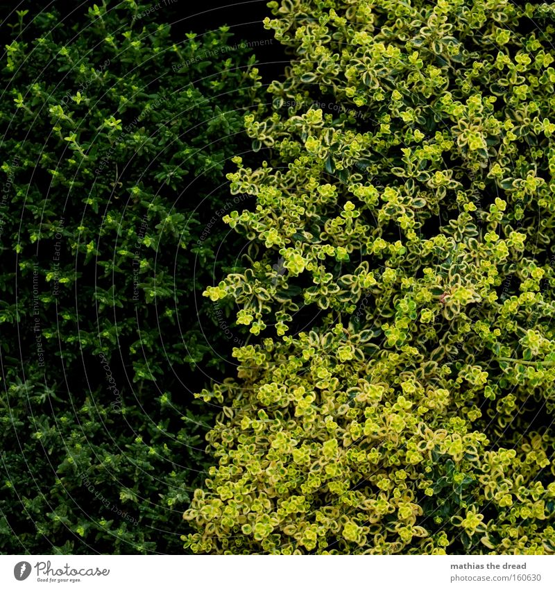 Nothing going on without moss Moss Foliage plant Nature Plant Ground cover plant Line Bright Dark Contrast Divide Difference Structures and shapes