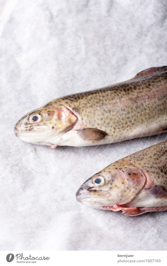 White Red Animal Background picture Food Fresh Paper Kitchen Fish Meat Raw Rustic Trout Ready Rainbow trout