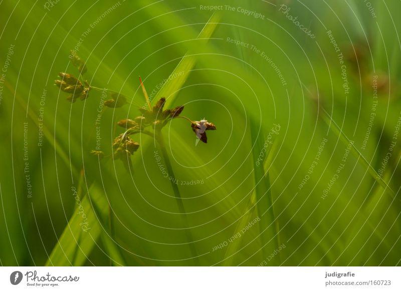 Nature Green Plant Summer Colour Environment Meadow Grass Blade of grass Pollen