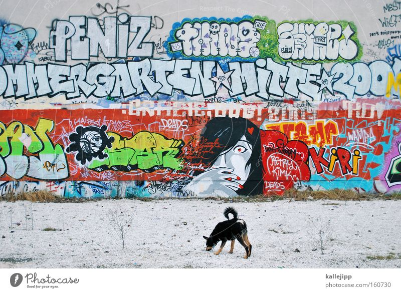 monkey Graffiti Art Town Woman Dog Wall (building) Culture Society Characters Document Letters (alphabet) Illegal Ghetto Mammal Pop Art Photos of everyday life
