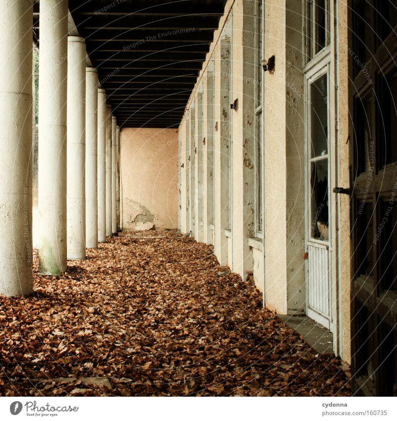 Leaf Life Autumn Window Time Transience Derelict Decline Column Destruction Memory Corridor Vacancy Arcade