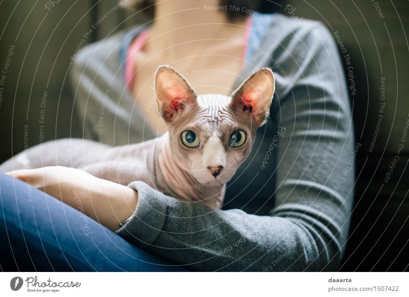 a cat at you Cat Naked Animal Joy Life Love Emotions Lifestyle Natural Feminine Style Think Feasts & Celebrations Moody Design Friendship