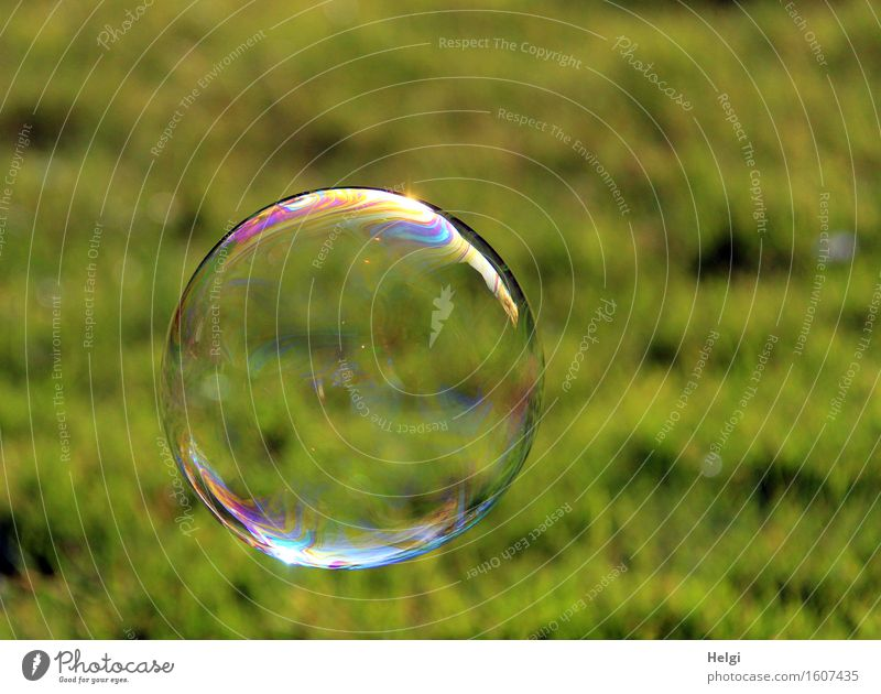 round free floating Environment Nature Grass Garden Round Multicoloured Green Joy Uniqueness Soap bubble Ease Hover Easy Delicate Transparent Colour photo