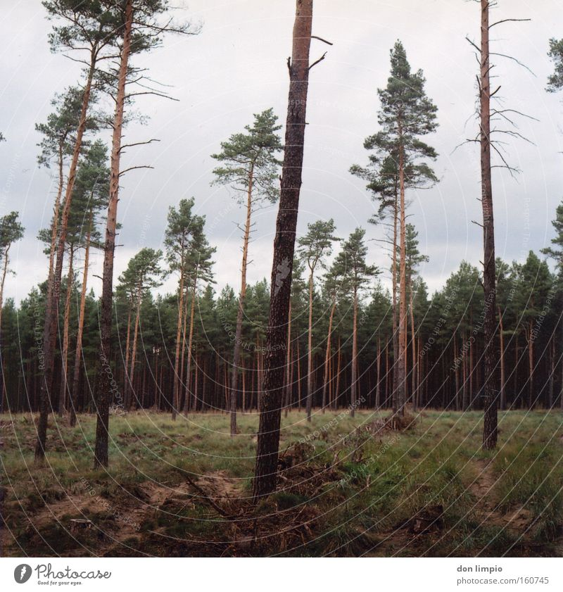 buy a piece of forest? Forest Tree Tree trunk Clearing Grass Logging Forest death Nature Green Bleak Fuel Medium format Analog