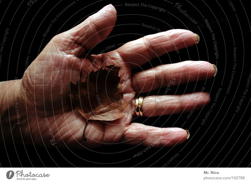 Old Hand Leaf Autumn Life Senior citizen Fingers Grief Transience Wrinkles Retirement Distress Human being Wisdom Feeble Precarious