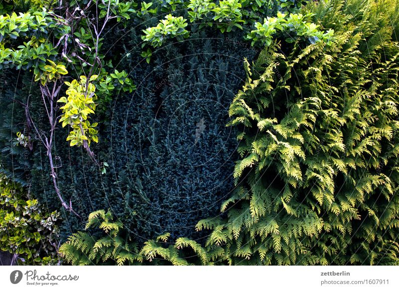 Hedge without flash Spring Garden Landscape Garden plot Thuja Border Neighbor Screening Green Conifer Copy Space Deserted Structures and shapes Day Forest