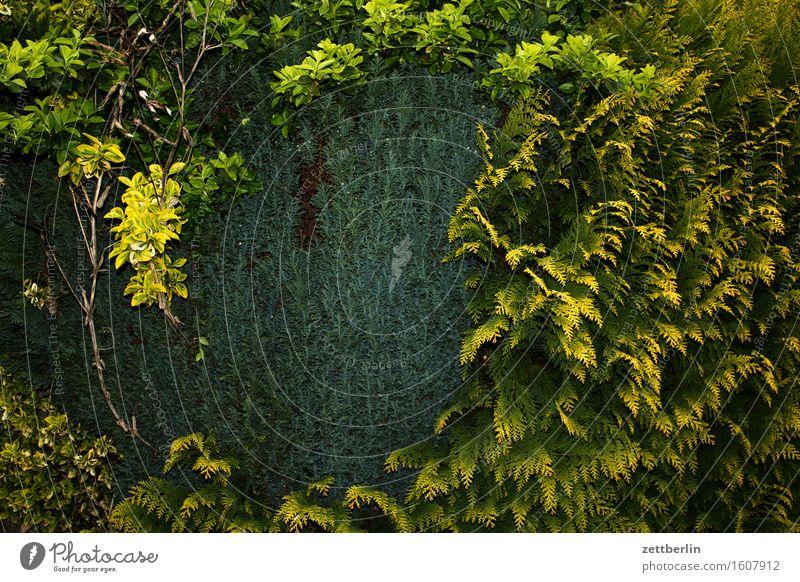 Hedge with lightning Spring Garden Landscape Garden plot Thuja Border Neighbor Screening Green Conifer Copy Space Deserted Structures and shapes Arrangement Day