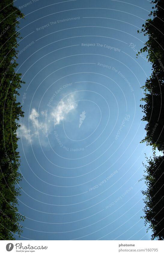 Nature Sky Green Blue Summer Freedom Lanes & trails Park Vantage point France Geometry Hedge Maze