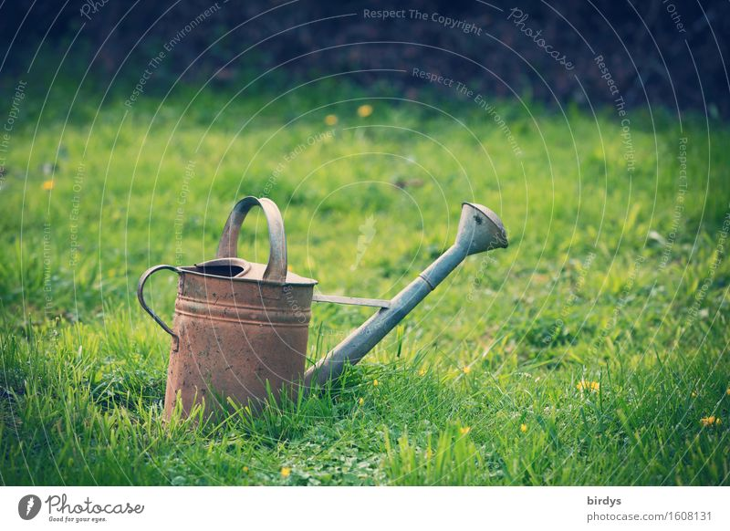 country lust Leisure and hobbies Spring Summer Autumn Flower Grass Garden Meadow Watering can Wait Esthetic Natural Positive Calm Serene Sustainability Nature