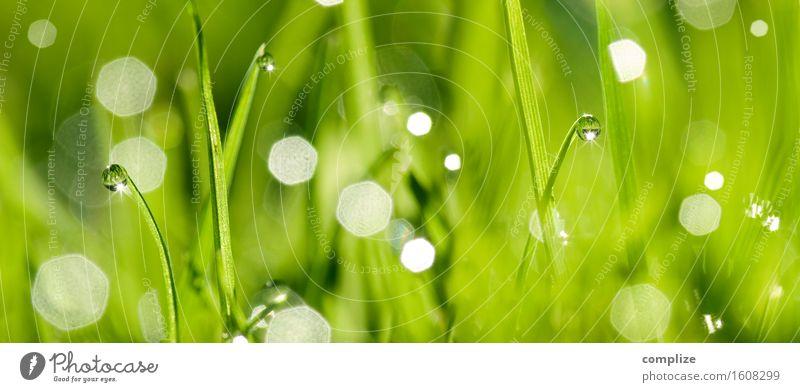 Green Fresh Grass Wellness Well-being Cure Spa Summer Nature Plant Drops of water Garden Meadow Wet Blade of grass Dew Water Natural Panorama (Format) XXL Blur
