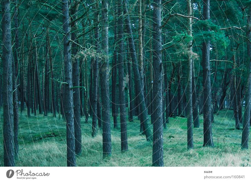magic forest Agriculture Forestry Environment Nature Landscape Elements Earth Tree Growth Dark Tall Cold Green Moody Loneliness Sustainability