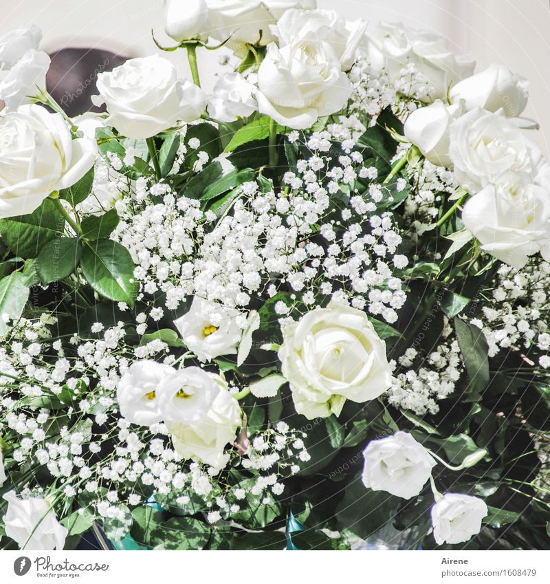 white-blooded Feasts & Celebrations Wedding Flower Rose Bouquet Flowering plant Blossoming Esthetic Fragrance Elegant Positive Rich Many Green White Emotions