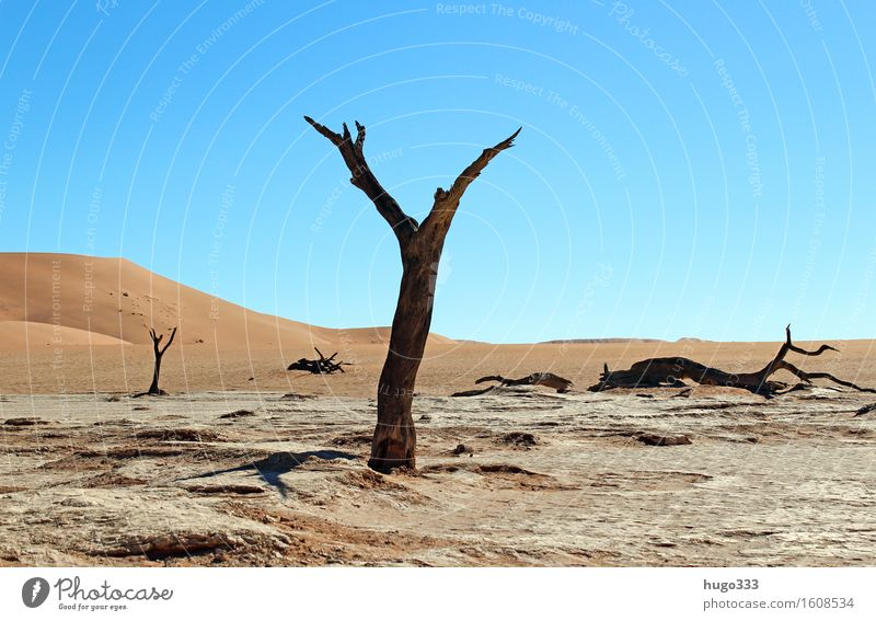 My friend the tree Environment Nature Landscape Elements Earth Sand Sky Climate Weather Drought Plant Tree Desert Namib desert Namibia Hot Bright Gloomy Dry