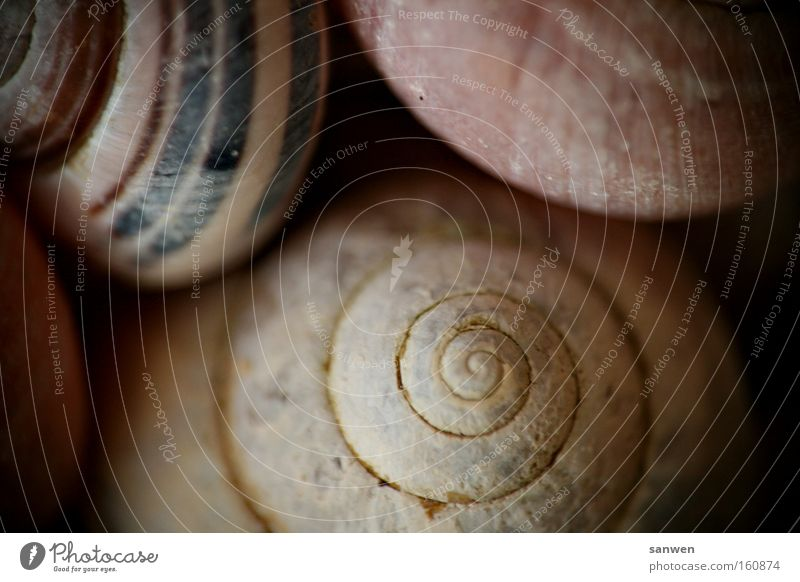 cuddle up with snails Snail Intimacy Cuddling Mussel Spiral Animal Decoration Nature Slowly Mollusk Snail shell Macro (Extreme close-up) Close-up
