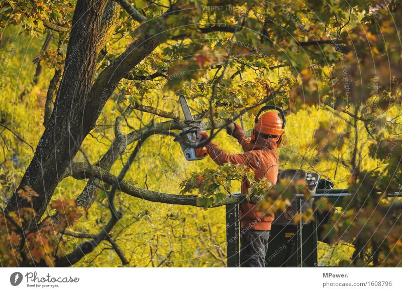 tree hairdresser Human being Masculine 1 30 - 45 years Adults Yellow Tree nursery Forester Working man Chainsaw Saw Autumn Treetop Gardener Safety