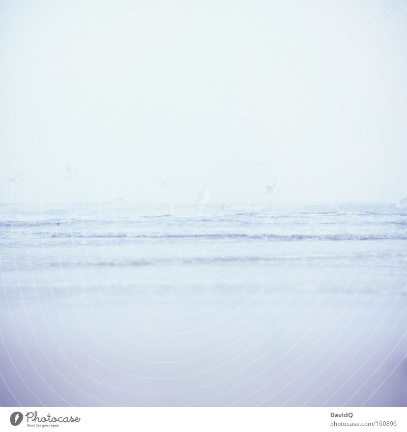 less is sea Ocean Lake Baltic Sea Water Waves Coast Beach Sand Bird Seagull Deep Far-off places Horizon Wanderlust Lomography