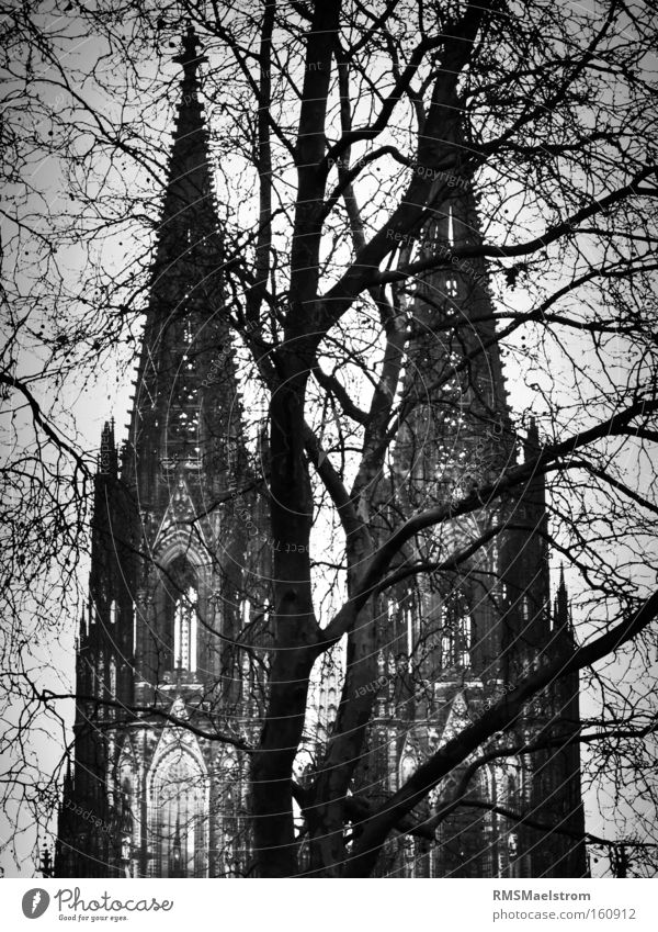 Der Kölner Dom Cologne Dome Church Germany Tourist Attraction Tree Abstract Black & white photo Dark House of worship köln kölner dom wwII